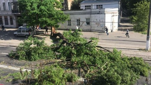 На Молдаванке рухнуло сухое дерево