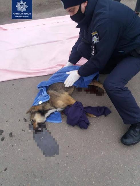 Одесские патрульные спасали собаку, которую сбила машина