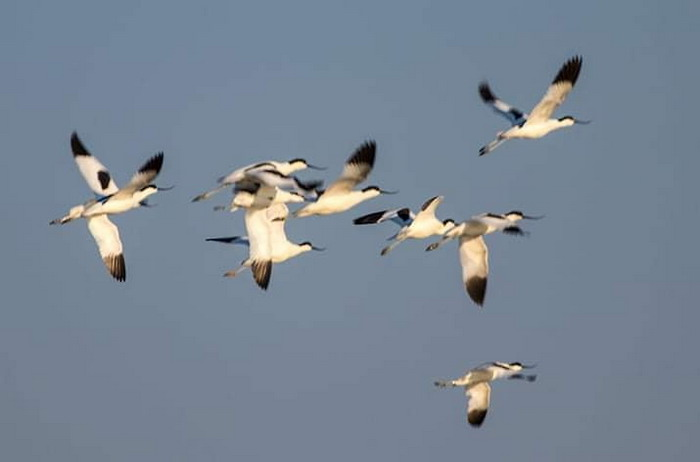 В Одесскую область прилетели редкие птицы (фото)