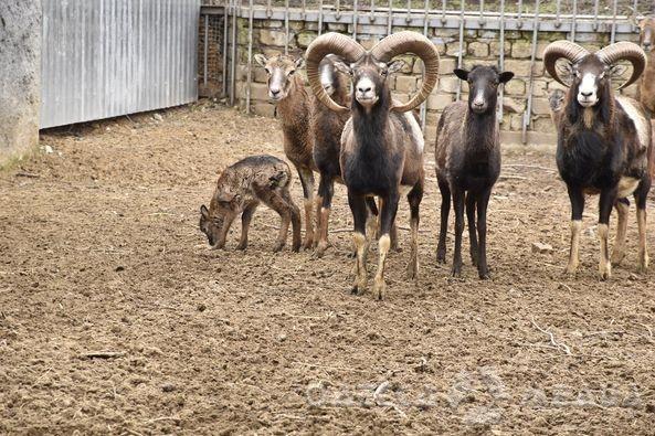 В Одесском зоопарке снова прибавление (фото)