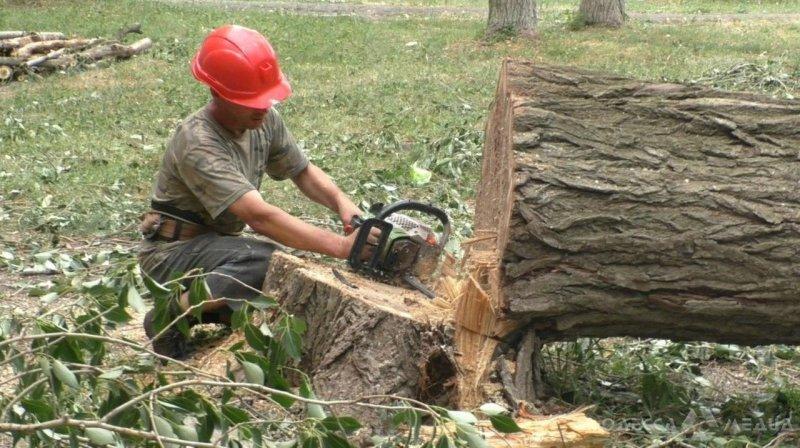 В Одессе обследовали 263 дерева, более 150 придется спилить (фото)