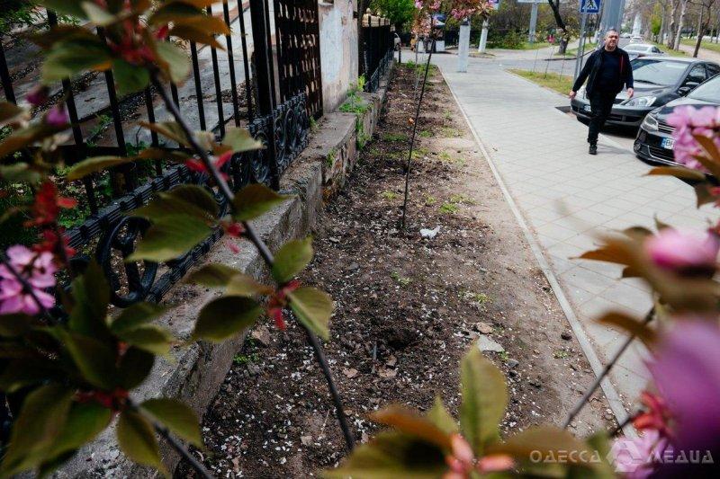 Вандализм в Одессе: ночью хулиганы уничтожили десятки сакур на улице Академической