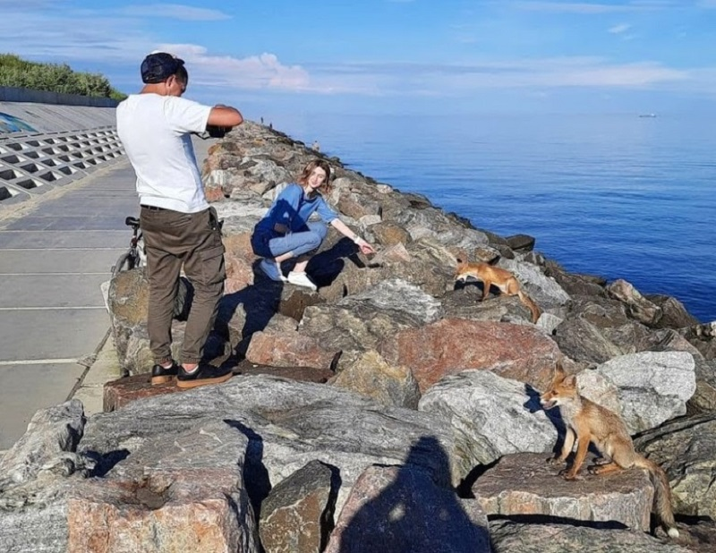 В Фонтанке на пляже замечены четверолапые отдыхающие (фото)