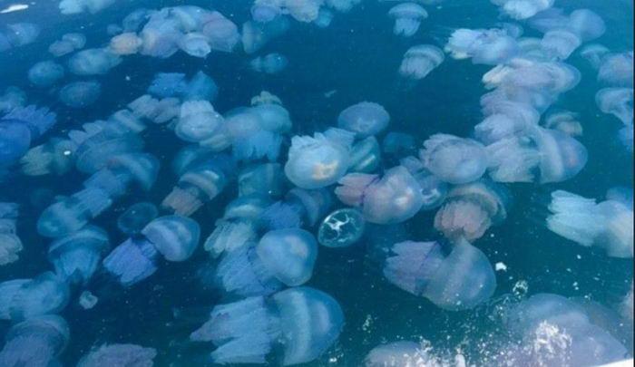 На одесский пляж приплыли полчища медуз (видео)