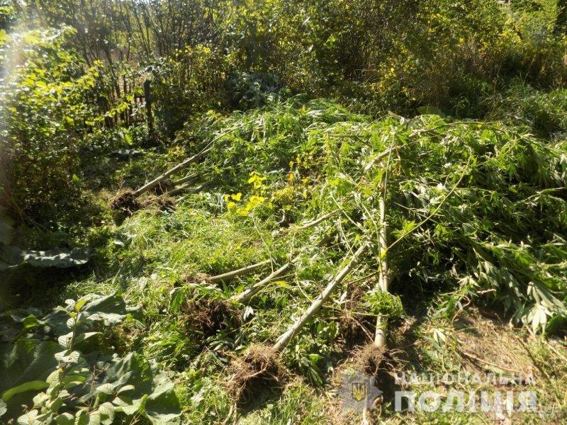 «Выращивал для себя»: в Одесской области разоблачен наркоплантатор (фото)